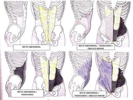 musculatura abdominal entrenador personal madrid josemi