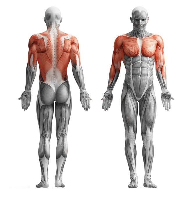 Dominadas-activacion-muscular-Entrenador-personal